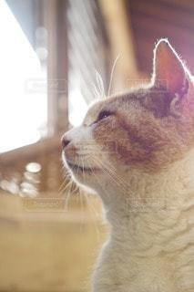 猫の写真・画像素材[14353]