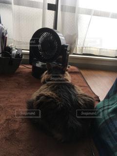 猫,夏,暑い,後姿