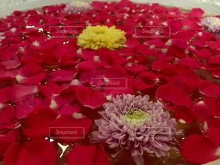 花のクローズアップの写真・画像素材[2122376]