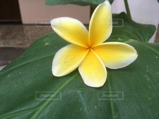 花の写真・画像素材[2146478]