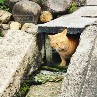 猫,動物,屋外,オレンジ,ペット,岩,人物,コンクリート,地面,石,ネコ