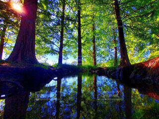 森の中の写真・画像素材[4950769]