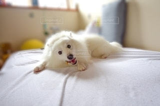 犬の写真・画像素材[2486744]