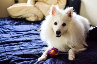 犬の写真・画像素材[2486753]