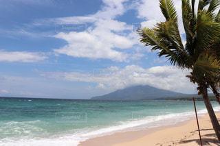 ヤシの木のあるビーチの写真・画像素材[2352709]