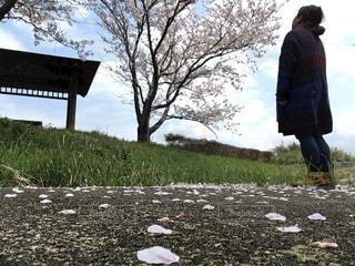桜,後ろ姿,人物,背中,人,後姿,ナチュラル