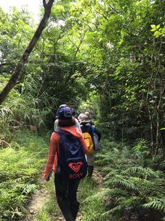 自然,風景,雨,屋外,島,後ろ姿,沖縄,旅行,草木,熱帯雨林