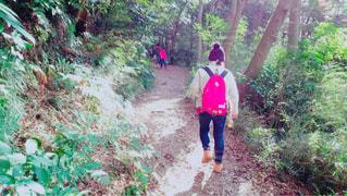 自然,風景,森林,木,屋外,赤,後ろ姿,歩く,人物,背中,人,後姿,ハイキング,ライフスタイル,日中,インスタ,散策