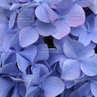 花,夏,雨,紫,葉,鮮やか,梅雨,インスタ,インスタ映え