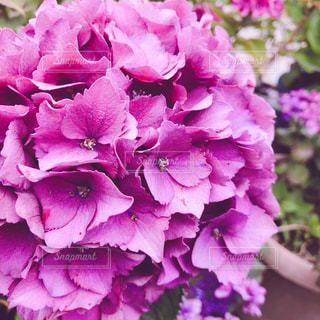 花,夏,雨,緑,紫,鮮やか,グリーン,梅雨,ライフスタイル,草木,インスタ,インスタ映え