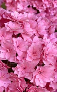 花,夏,雨,鮮やか,梅雨,ライフスタイル,草木,インスタ,インスタ映え