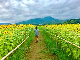 空,夏,屋外,向日葵,眺め,半袖