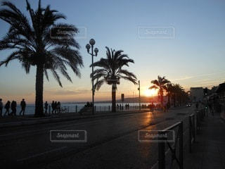 背景に夕日のあるヤシの木の写真・画像素材[3364150]