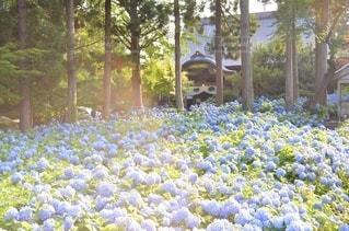 青の季節の写真・画像素材[3378654]