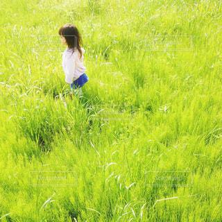 春 - No.455926