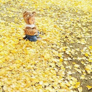 秋,冬,子どものいる風景,黄色,落ち葉,ひとり,イチョウ,こども,くま,こどものいる風景