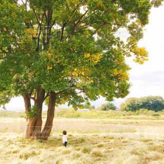 大きな木と男の子の写真・画像素材[966798]