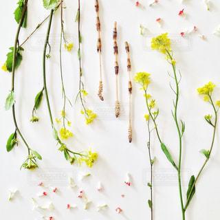 つくしと春の花の写真・画像素材[1038545]