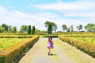 緑の中を走る女の子の写真・画像素材[1631299]