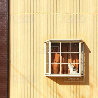 猫,建物,茶色,窓,影,日常,壁,ベージュ,日向ぼっこ,出窓,日常風景,ミルクティー色