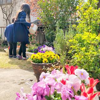 春の庭。水やりをするこどもたち。の写真・画像素材[2141586]