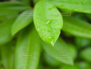 緑の植物のクローズアップの写真・画像素材[2209880]