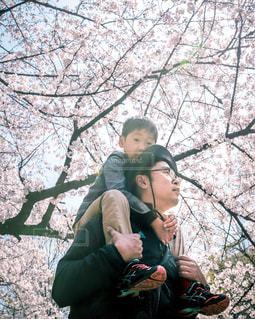 桜,人物,人,イベント,肩車,男の子,ありがとう,お父さん,父の日,6月16日