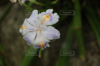 花,白,草木