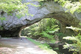 自然,屋外,水面,樹木,洞窟,草木