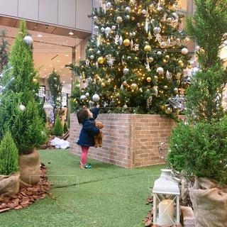 キラキラクリスマスツリーにタッチする女の子の写真・画像素材[933231]