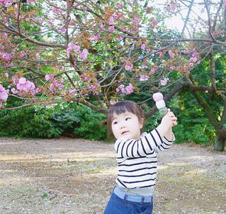 新宿御苑のお花見春コーデ、1歳8ヶ月の女の子コーデの写真・画像素材[1149674]