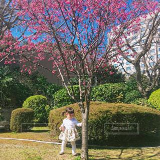 桜の木の下の1歳8ヶ月女の子の全身花柄春コーデの写真・画像素材[1149745]