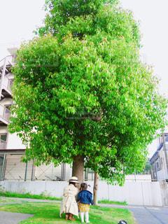 緑の大きな木の下に並んで座る小学生と1歳8ヶ月女の子のコーデの写真・画像素材[1149769]