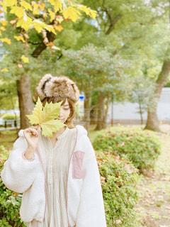 大きなかえでの葉っぱて顔を隠し照れる女性の写真・画像素材[1653612]