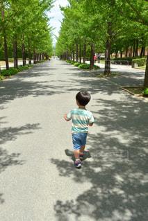 並木道をお散歩する男の子の写真・画像素材[2300540]