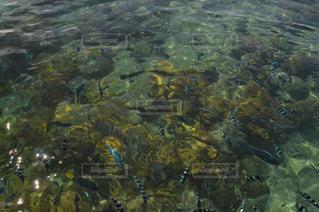 透き通る海の写真・画像素材[2360032]