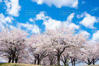 春一番の写真・画像素材[2411516]