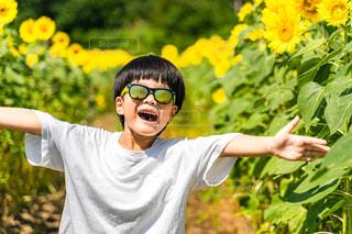 子ども,ファッション,風景,花,アクセサリー,屋外,ひまわり,サングラス,黄色,眼鏡,樹木,人物,人,笑顔,少年,草木,メガネ,半袖,白T,5歳児