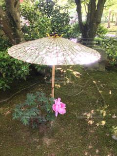 花,傘,屋外