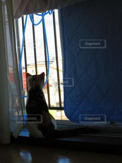 窓の前に座っている猫の写真・画像素材[2130491]