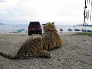 湖,後ろ姿,ぬいぐるみ,背中,虎