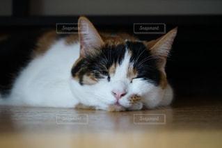 テーブルの上に座っている猫の写真・画像素材[2292524]