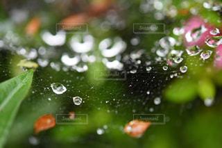 公園,雨,屋外,水滴,蜘蛛の巣,樹木