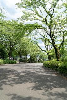 空,公園,夏,屋外,緑,晴れ,散歩,樹木,新緑,グリーン,天気,お散歩,草木,日中