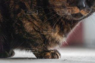 ネコの写真・画像素材[2323342]