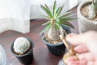 植物のお手入れの写真・画像素材[2723545]