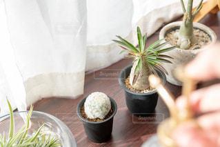 植物のお手入れの写真・画像素材[2723546]