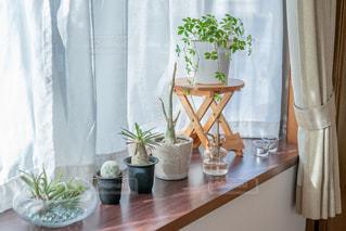 出窓の植物の写真・画像素材[2723543]