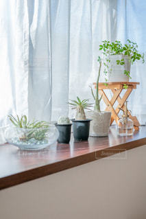 出窓の植物の写真・画像素材[2723542]