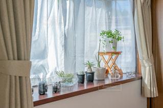 出窓の植物の写真・画像素材[2723544]
